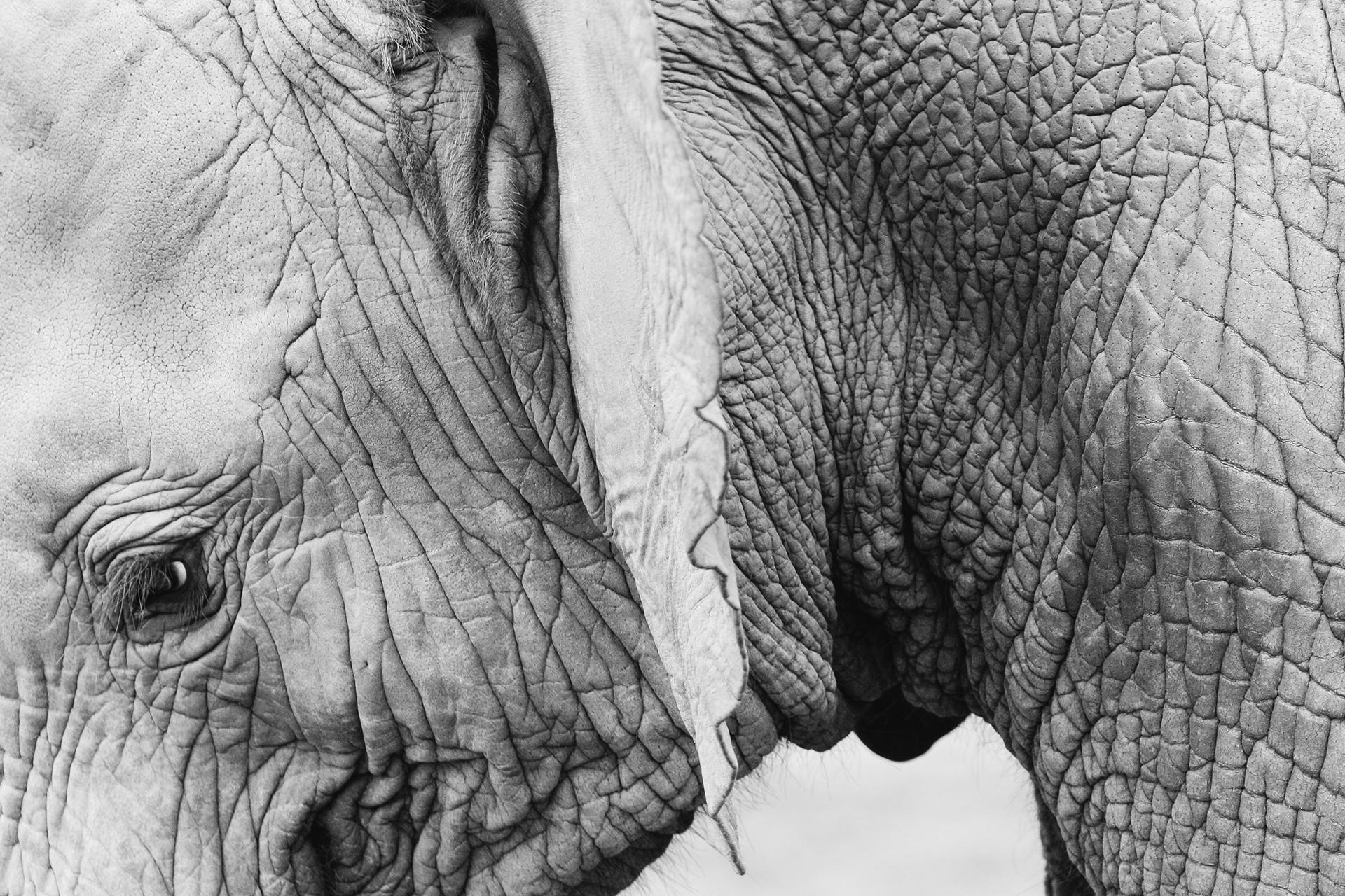 Kosteloos Stockfoto downloaden Jay Mantri babyelephant